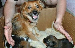 Aleshanee,-Ken-and-pups