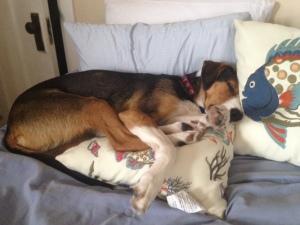 g pillows